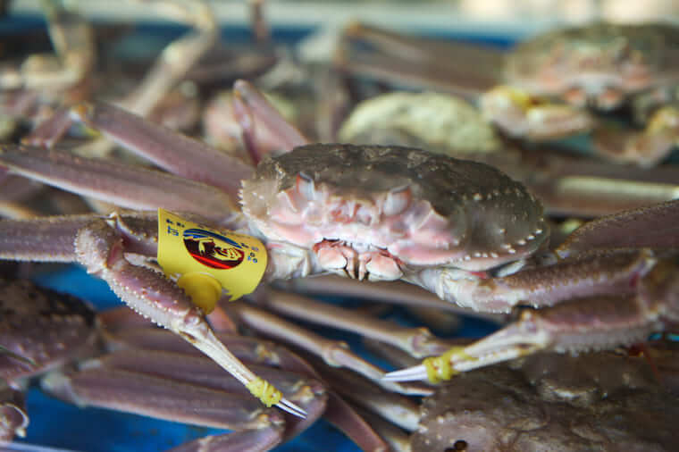 ヨンドクケ(盈徳蟹)